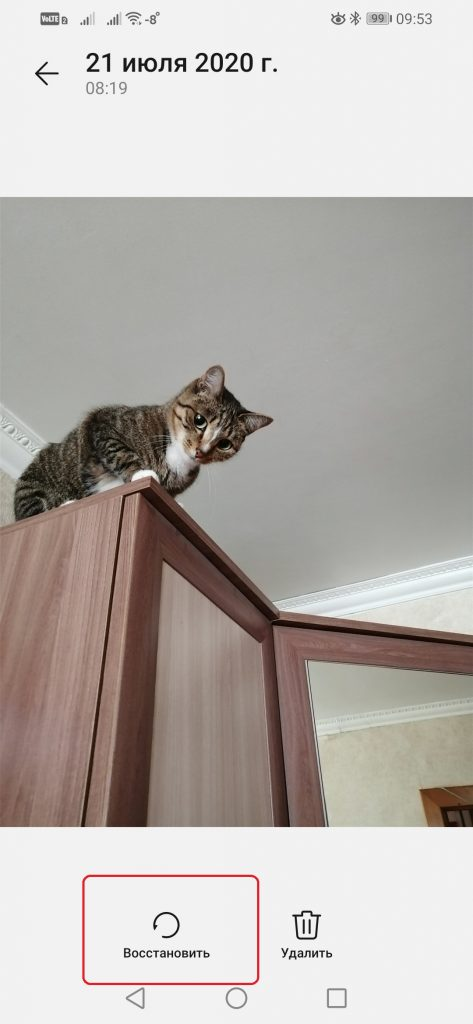 фото котика смартфоном Самсунг